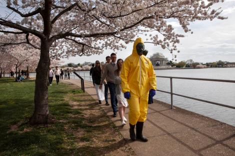 pandemic cherry blossoms