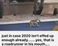 Wile E. Coyote wins one