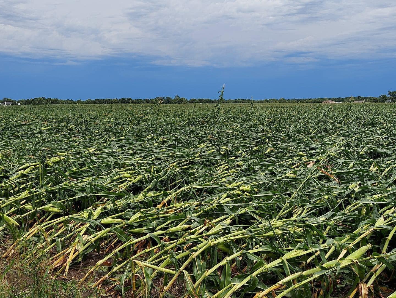 flattened-corn